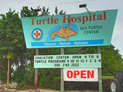 Turtle_Sign
